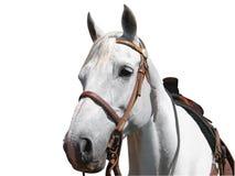 Punto di vista del ritratto del cavallo del cowboy fotografie stock libere da diritti