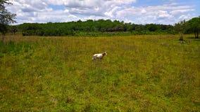Punto di vista dell'animale sulle steppe nel pascolo selvaggio sull'erba fra gli alberi e le palme sotto cielo blu Immagine Stock