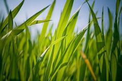 Punto di vista dell'erba Immagine Stock Libera da Diritti