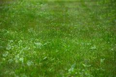 Punto di vista dell'erba con profondità di campo bassa Fotografia Stock