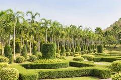 Punto di vista dell'ornamentale della guarnizione dell'arbusto nel campo verde pubblico di erba e del parco Fotografia Stock