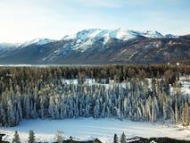 Punto di vista dell'uccello della foresta di Kanas della neve nell'inverno Fotografia Stock