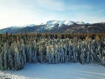 Punto di vista dell'uccello della foresta di Kanas della neve nell'inverno Fotografie Stock Libere da Diritti