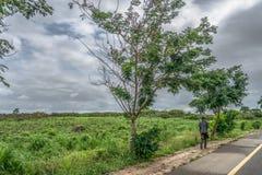 Punto di vista dell'uomo che cammina lungo il bordo della strada con la zappa tradizionale sulla parte posteriore, sulla vegetazi fotografia stock libera da diritti