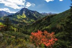 Punto di vista della quercia rossa Fotografia Stock Libera da Diritti