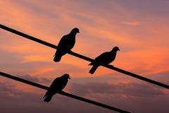 Punto di vista della siluetta dei piccioni sotto il cielo crepuscolare Fotografia Stock Libera da Diritti