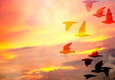 Punto di vista della siluetta dei piccioni sotto il cielo crepuscolare Immagine Stock