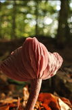Punto di vista dettagliato di un fungo Immagine Stock
