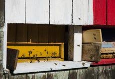 Punto di vista dettagliato di vecchia arnia variopinta di legno e delle api di volo Immagine Stock