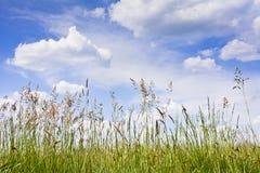 Punto di vista di alta erba sulle nuvole nel cielo blu Immagine Stock