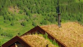 Punto di vista di erba gialla che ondeggia dal vento sul tetto di poca casa con il tubo Albero nel campo Foresta verde archivi video