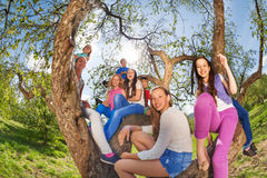 Punto di vista di Fisheye degli adolescenti sorridenti che si siedono sull'albero Immagini Stock