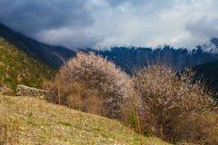 Punto di vista di mattina della natura delle montagne dei paesaggi Fondo del paesaggio di trekking della montagna Nessuno foto Ma Fotografia Stock Libera da Diritti