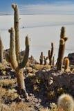Punto di vista di Salar de Uyuni da Isla Incahuasi Dipartimento di Potosà bolivia Immagini Stock Libere da Diritti