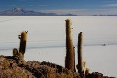 Punto di vista di Salar de Uyuni da Isla Incahuasi Dipartimento di Potosà bolivia Fotografia Stock Libera da Diritti