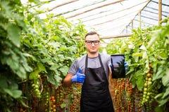Punto di vista di un agricoltore attraente in una serra con il usin dei pomodori Fotografia Stock Libera da Diritti