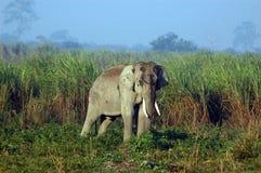Punto di vista di un elefante in una giungla. Fotografia Stock
