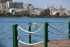 Punto di vista di un uccello dell'airone in Lagoa Rodrigo de Freitas Immagini Stock Libere da Diritti