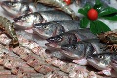 Punto di vista di vari pesci sul contatore Immagine Stock Libera da Diritti