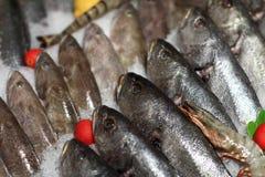 Punto di vista di vari pesci sul ghiaccio Immagini Stock