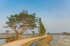 Punto di vista di gestione delle acque nelle risaie dal canale di irrigazione prima della piantatura immagini stock libere da diritti