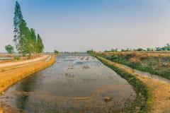 Punto di vista di gestione delle acque nelle risaie dal canale di irrigazione prima della piantatura immagine stock libera da diritti