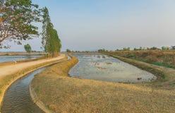 Punto di vista di gestione delle acque nelle risaie dal canale di irrigazione prima della piantatura fotografia stock