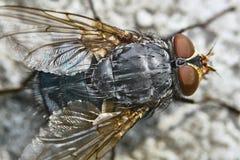 Punto di vista grigio della mosca da sopra immagine stock libera da diritti