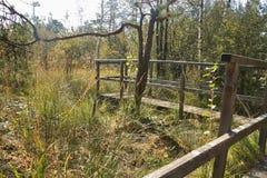 Punto di vista di legno nell'IBM Moorland in Austria settentrionale, in autunno in anticipo fotografia stock