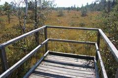 Punto di vista di legno nell'IBM Moorland in Austria settentrionale, in autunno in anticipo fotografia stock libera da diritti