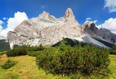 Punto di vista di Monte Pelmo con il pino montano, Tirolo del sud Fotografia Stock Libera da Diritti