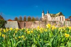 Punto di vista panoramico della chiesa di Kloster, della parete antica della fortezza e dei tulipani dei fiori alla primavera in  immagini stock