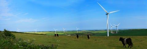 Punto di vista panoramico di un parco eolico e del bestiame Fotografia Stock Libera da Diritti