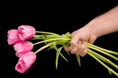 Punto di vista parziale del primo piano dell'uomo che tiene i tulipani rosa sul nero Fotografie Stock