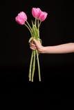 Punto di vista parziale della donna che tiene i bei tulipani rosa sul nero Immagini Stock
