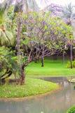 Punto di vista piacevole del giardino e della piscina Fotografie Stock Libere da Diritti