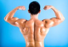 Punto di vista posteriore del bodybuilder di misura fotografie stock