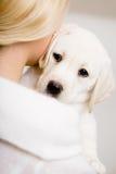 Punto di vista posteriore del cucciolo di abbraccio labrador della donna Immagine Stock