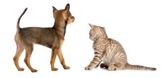 Punto di vista posteriore o posteriore del gattino e del cucciolo Fotografia Stock
