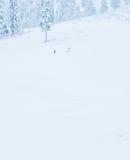 Punto di vista scenico di piccola gente che cammina in montagna della neve, Washington, Fotografia Stock