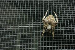 Punto di vista sopraelevato del ragno su una porta antizanzare fotografia stock