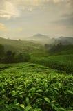 Punto di vista sulla cima dell'altopiano di Cameron, della valle del tè e dell'alba Fotografia Stock