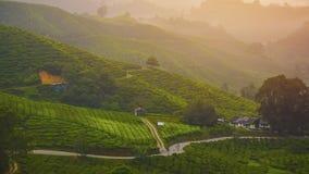 Punto di vista sulla cima dell'altopiano di Cameron, della valle del tè e dell'alba Immagine Stock