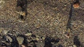 Punto di vista superiore aereo della ragazza corrente al litorale con le pietre per lastricare archivi video