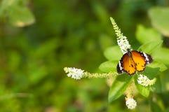 Punto di vista superiore dei fiori e della farfalla Fotografia Stock