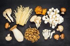 Punto di vista superiore dei funghi differenti Immagine Stock Libera da Diritti
