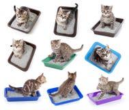 Punto di vista superiore dei gatti che si siede nell'insieme del cestino per i rifiuti isolato Fotografia Stock Libera da Diritti