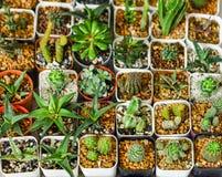 Punto di vista superiore del cactus e dell'aloe vera in piccoli vasi da fiori di plastica Fotografia Stock