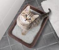 Punto di vista superiore del gatto che si siede in cestino per i rifiuti sul pavimento del bagno immagini stock