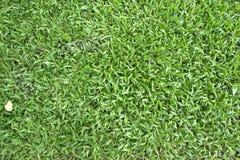 Punto di vista superiore dell'erba verde Immagini Stock